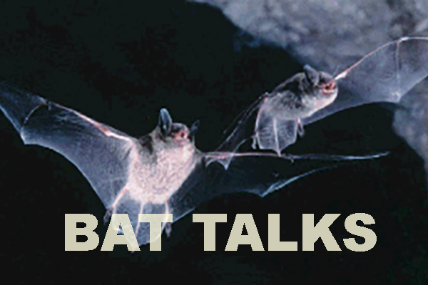 Adventure Bat Talks
